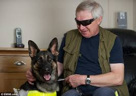 German Shepherd Blindness Blind Man Whose Guide Dog Was Run Over By A Taxi Told He May Face