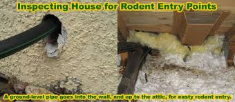 how is a rat getting in my house building or attic rodent