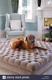 Upholstered Ottomans Large Lying On Gray Velvet Upholstered Ottoman In Living Room