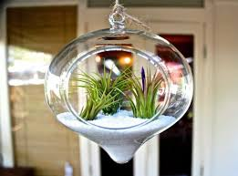 decorating cheap hanging terrarium kit ideas for home porch