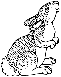 peter rabbit clipart kids coloring
