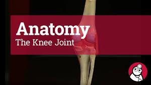 Diagram Of Knee Anatomy Anatomy The Knee Joint Youtube