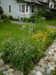 native plants for rain gardens rain garden kit