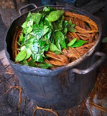 healing addictions with ayahuasca reset me