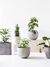 Concrete Planters Best 25 Large Concrete Planters Ideas On Pinterest Concrete