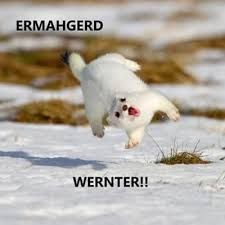 Ermahgerd Memes - meme of the week ermahgerd animals