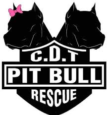 Teek He Kaufen Teek U2014 Casa Del Toro Pit Bull Rescue