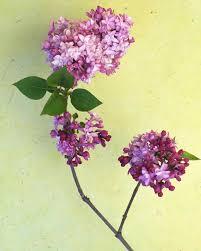 7 flower garden ideas martha stewart