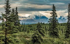 Alaska Forest images Forest digest week of november 14 2016 american forests jpg
