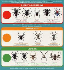 Male Spider Anatomy All About Spiders Types Of Spiders Life Cycle Etc