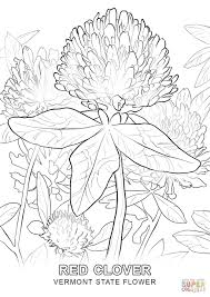 Red Flag White Flower Vermont State Flower Coloring Page Free Printable Vermont State