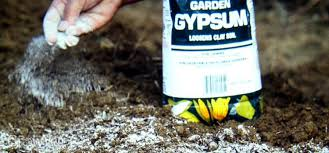growing vegetables in clay soil