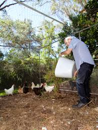 don u0027s tips backyard farm u2013 chooks burke u0027s backyard