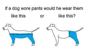 Epic Meme - most epic meme of 2015 how would a dog wear pants