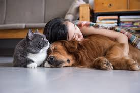 Best Flooring For Pets The 3 Best Types Of Flooring For Pet Owners Floor Coverings