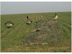 Layout Blind For Sale Avery Killerweed Layout Blind Kit