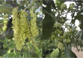 native plants at csu dominguez blog page 3 nature nhmla