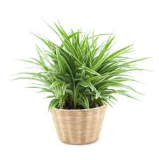 home interior plants best indoor plants for your home s trust