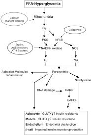 is oxidative stress the pathogenic mechanism underlying insulin