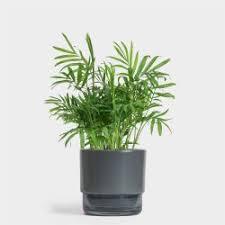 small indoor plants shop