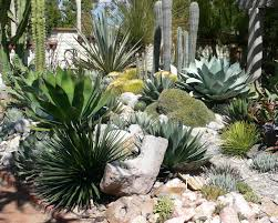 Succulent Rock Garden by Yard The Year Of The Succulent Tips For Creating A Succulent