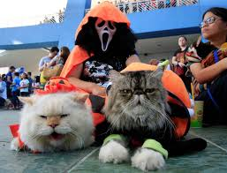 search halloween city dressed up pets and more in this week u0027s best halloween themed