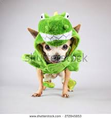 dog halloween costume stock images royalty free images u0026 vectors
