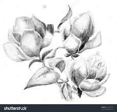 Cheapest Home Decor Online by Flower Drawings E2 80 93 Pencil Art Drawing Loversiq