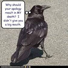 Crow Meme - animal capshunz crow funny animal pictures with captions