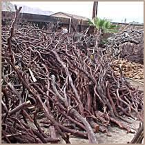 manzanita branches for sale manzanita burlworks sticks staffs