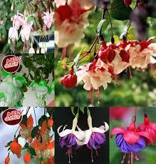 Japanese Lantern Plant Online Get Cheap Japanese Lanterns Plants Aliexpress Com