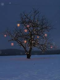 how to wrap christmas lights around a tree how to wrap lights around trees christmas lights holidays and