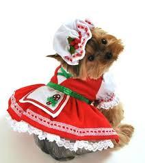 Dog Halloween Costumes 76 Dog Images Dog Animals