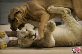imagenes de animales y cosas cosas graciosas de animales imágenes graciosas y divertidas