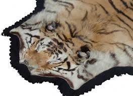 flat head tiger rug panthera tigris by van ingen jonny williamson