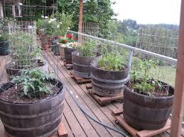 grow a vegetable container garden container gardening patios
