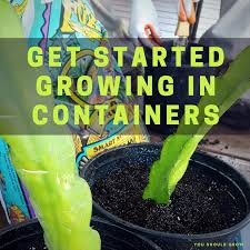 container vegetable gardening for beginners you should grow