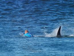 surfer attacked by shark u0027did everything right u0027