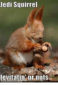 Squirrel Meme - jedi squirrel levitati ur nuts dank meme on me me