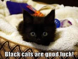Good Luck Cat Meme - black cats are good luck funny cat pictures see funny images