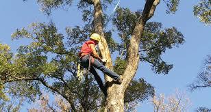 tree trimming service atlanta cobb county ga