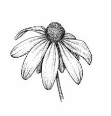 simple flower line drawing google search all art pinterest