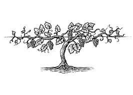 vine tree vine pencil and in color vine tree vine