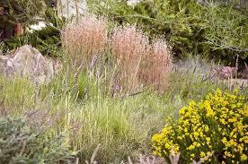 feeding birds plants that attract birds growing ornamental grass