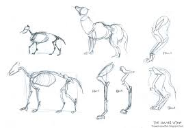 the wolves within wolf sketches reference