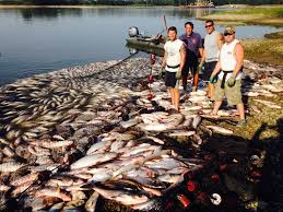 Michigan Dnr Lake Maps by Dnr Video Shows Frenzied Asian Carp Leaping From Illinois River