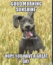 Have A Great Day Meme - good morning sunshine hope you have a great day make a meme