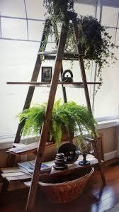 Indoor Gardening by 103 Best Plants U0026 Greenry Images On Pinterest Plants Gardening