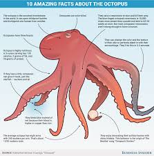 10 reason the octopus is incredible business insider