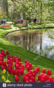 riverbanks botanical garden tulips holland river stock photos u0026 tulips holland river stock